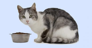 Dietary Health Tips For Feeding your Feline