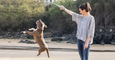 Reasons To Exercise Your Doggy For Health