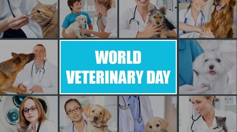 Celebrating World Vet Day With Veterinarian