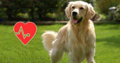 ways to improve dog's life span