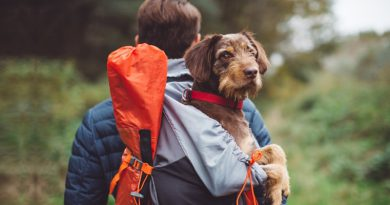 Tips To Plan Out A Perfect Vacation With Your Furry Pal