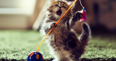 Indoor Cat Care Tips to Keep Your Feline Happy and Healthy