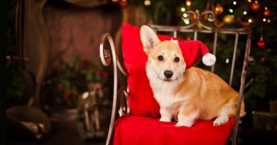 Christmas Sale On Pet Supplies