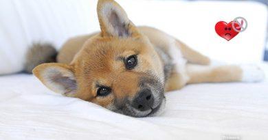 Heartworm Disease in Dogs