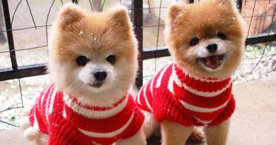 pet-sefty-during-winter