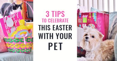 Celebrate This Easter With Your Pet