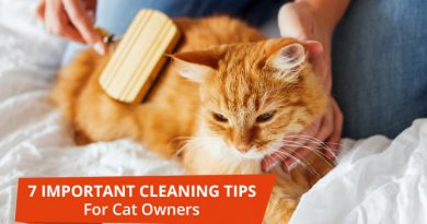 Important Cleaning Tips For Cat