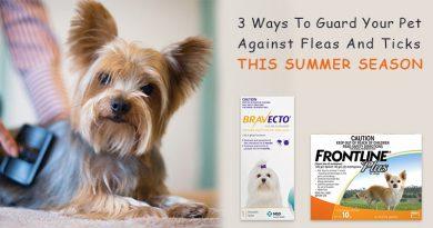 Pet Against Fleas And Ticks Season