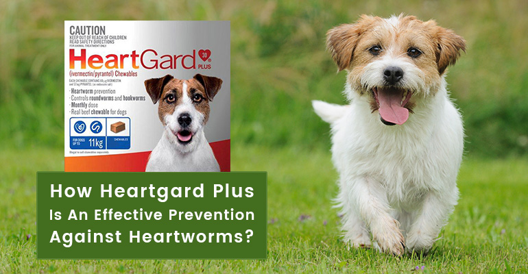 Heartworm-Prevention-Heartgard-Plus