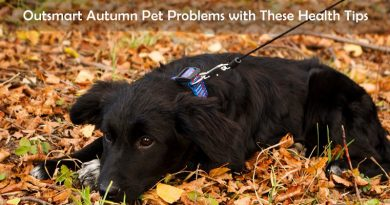 Health Pet Tips To Implement This Autumn