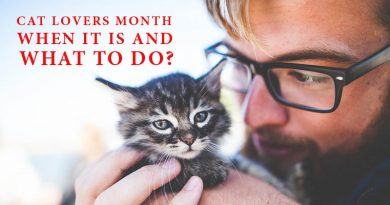 Cat Lovers Month