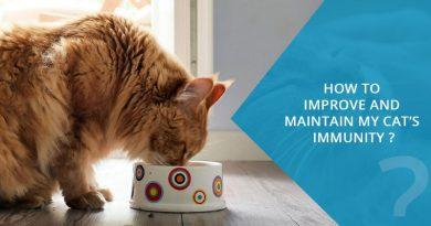 cat's immune system