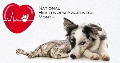 national heartworm awareness month