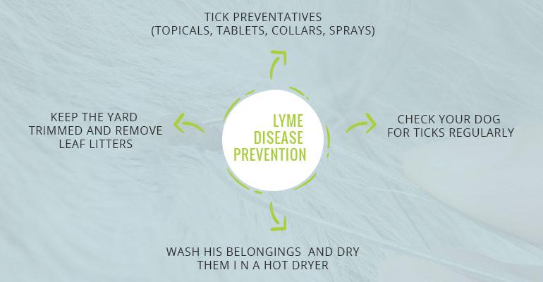 Lyme-Disease-Prevention-tips