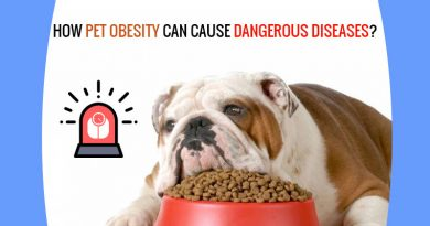 Obesity in pets