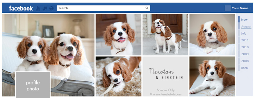 creating social media account of your pet