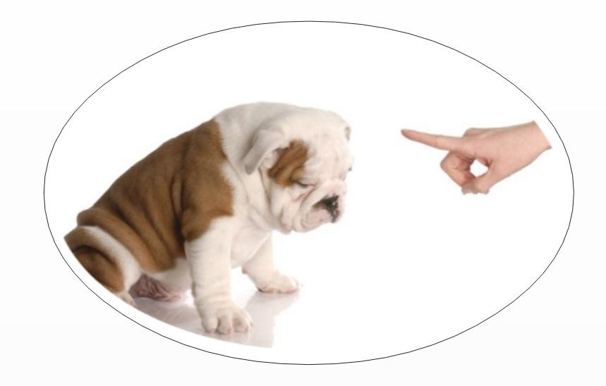 Pet parents mistake: Scolding dog
