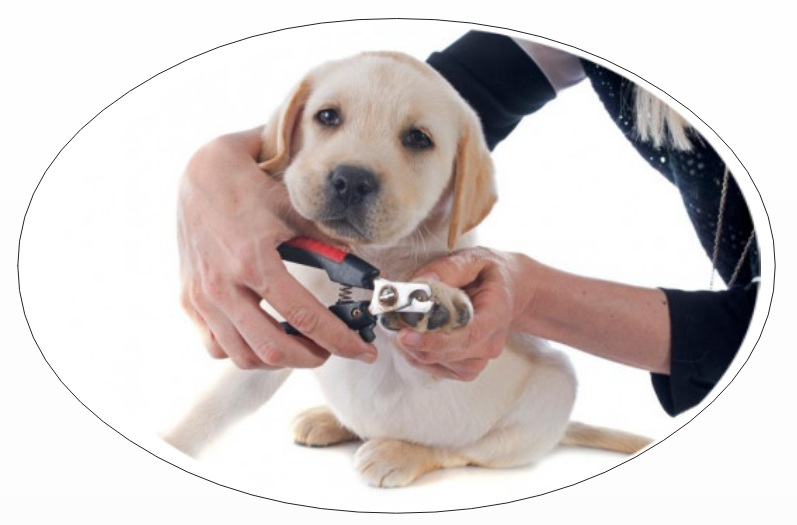 Pet parents mistake: not cutting nails of dog