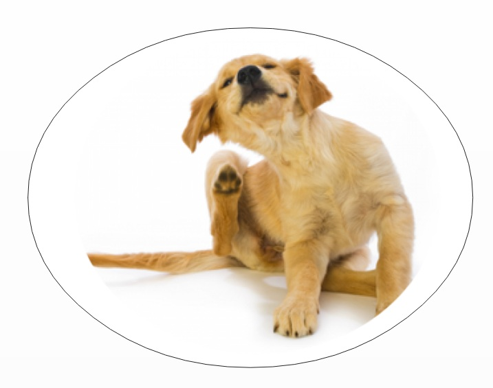 Pet parents mistake: not treating dog