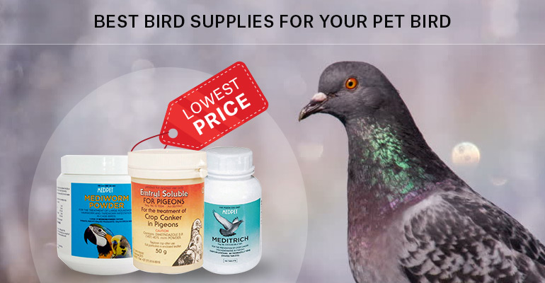 Best-Bird-Supplies