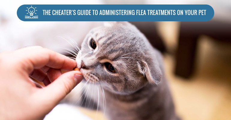 tips to administer flea treatments