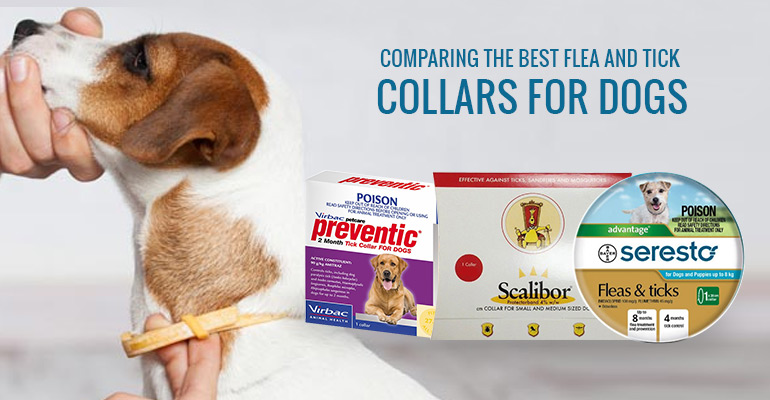 Best Flea & Tick Collar for Dogs
