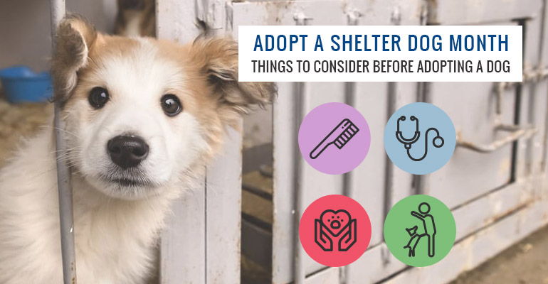 Adopt-A-Shelter-Dog-Month