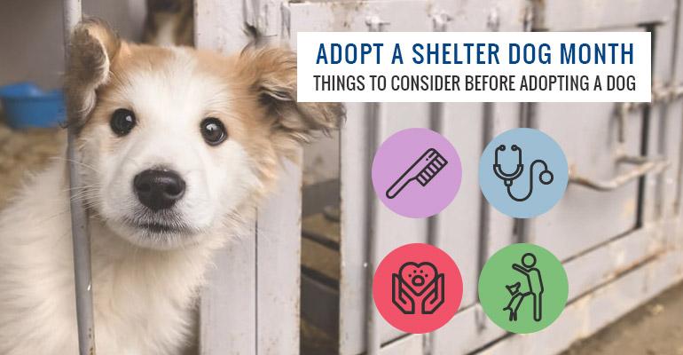 Adopt-A-Shelter-Dog-Month
