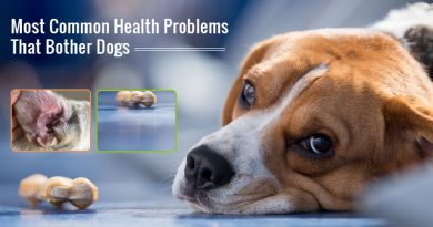 Most Common Health Problems In Dogs