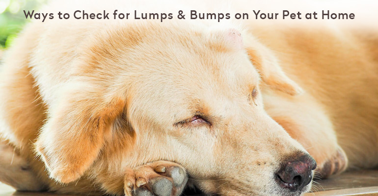 Ways to check lump on dog