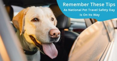 National Pet Travel Safety Day