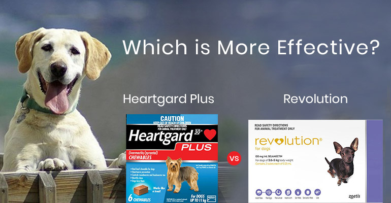 Heartgard Plus Vs. Revolution – Which Is More Effective?