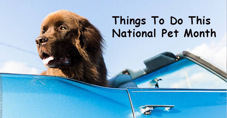 Things To Do This National Pet Month