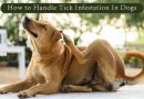 How to Handle Tick Infestation In Dogs