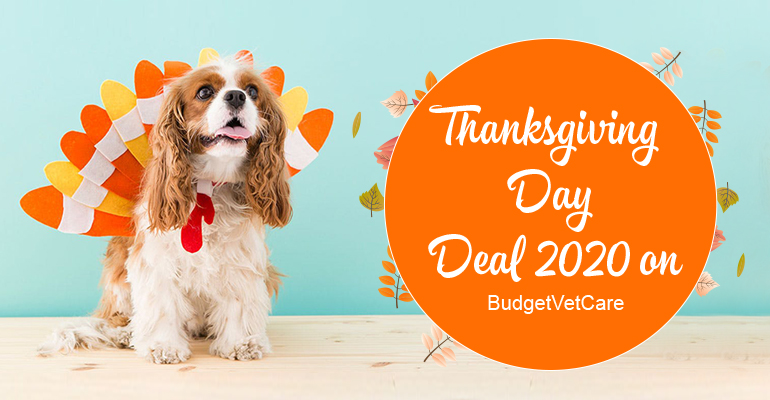 Best Thanksgiving Day Deals 2020 on BudgetVetCare
