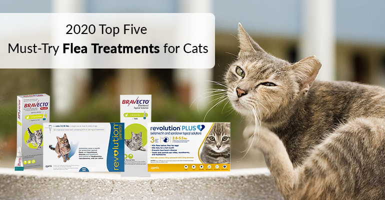 2020 Top Five Must-Try Flea Treatments for Cats