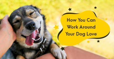 How You Can Work Around Your Dog Love