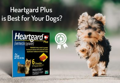 Why Heartgard Plus is Best for Your Dogs?