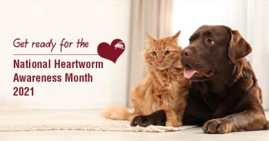 Get ready for the National Heartworm Awareness Month 2021