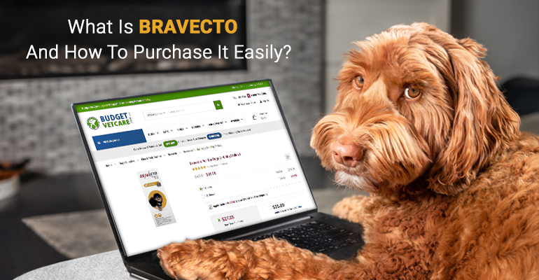 What Is Bravecto And How To Purchase It Easily?