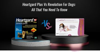 Heartgard Plus Vs Revolution For Dogs: All That You Need To Know