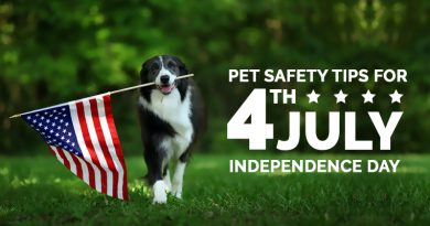 Pet Safety Tips for July 4-Independence Day