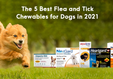 The 5 Best Flea and Tick Chewables for Dogs in 2021