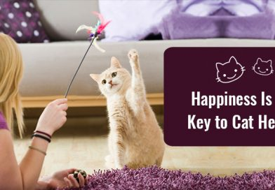It's September- The Healthy Cat, Happy Cat Month!