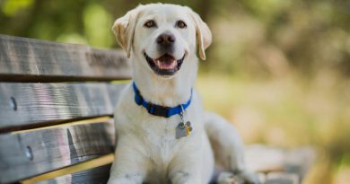 Tips to Care for your Dog During Spring