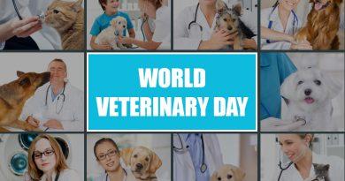 Celebrating World Vet Day With Veterinarian