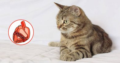 Treating Heartworms In Cats