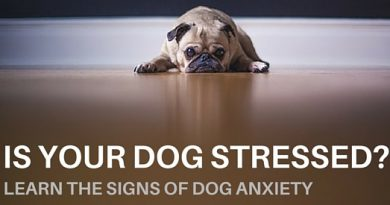 stressed dog and way to deal with
