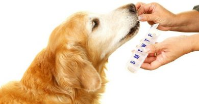 Joint-Supplements-Dog