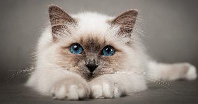Depressed-Cat